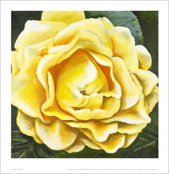 Linda Chambers - Yellow Rose - Market Harborough